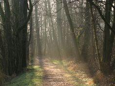 Landgoederen en natuur Eelde (14km) http://wandelenrondroden.nl/lange-routes-11-20km/wandelroutes/11-20km/landgoederen-en-natuur-eelde-ca-14km  Dezeafwisselende wandelingbiedt u veel. U loopt door drassige veengebied, het open polderlandschap, langs de restanten van een oude havezathe en door de bossen van verschillende landgoederen. De huizen zijn niet te bezichtigen, maar u kunt wel van de mooie tuinen, vaak in Engelse landschapsstijl, genieten.