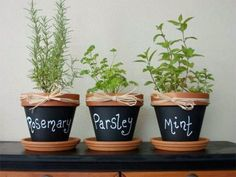 Indoor Container Gardening 3 Easy Steps to Growing Herbs Indoors (and 5 Herb Garden Inspiration) - A handy supply of fresh herbs right on your windowsill is an avid cook's dream. We show you how easy growing herbs indoors is, and give you 5 great designs. Herb Garden In Kitchen, Diy Herb Garden, Herb Garden Design, Kitchen Herbs, Garden Pots, Herbs Garden, Kitchen Decor, Easy Garden, Window Seal Herb Garden