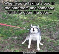 Lustige Welpen und niedliche Welpenvideos die lustige Dinge tun Funny Puppies And Cute Puppy Videos Doing Funny Things Lustige Tierbilder des Tages - 23 Bilder Funny Animal Jokes, Really Funny Memes, Stupid Funny Memes, Cute Funny Animals, Funny Relatable Memes, Funny Animal Pictures, Funny Cute, Big Animals, Super Funny