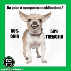 Isolati i due elementi che compongono il #chihuahua #bastardidentro #cane www.bastardidentro.it