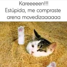 Funny Animal Memes, Cat Memes, Funny Cats, Funny Animals, Funny Memes, Funny Spanish Memes, Spanish Humor, Karen Memes, Bts Quotes