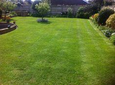01227 490 331 free lawn quotation an lawn survey