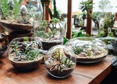 Getting lost in these magical little worlds today. Do you have terrariums in your plant collections?