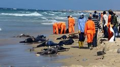 Odisea hacia Europa: Alarma por incalculable cantidad inmigrantes africanos | Diario El Mundo