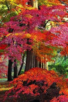 Autumn leaves-nature in all her beauty