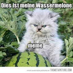 German kitty's watermelon...I have no idea why but this cracks me up.