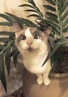 Gatti che sembrano demoni ma in realtà sono solo esseri incompresi.  #cats #animals