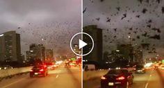Misteriosa Aparição De Pássaros Pretos Assusta a Cidade De Houston