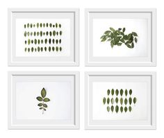 Leaves Collection 4 8x10 prints. Fine Art Photographic Natural History. Minimalist. Natural Home. Indoor garden botanical. Office decor. $100.00, via Etsy.