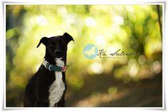 Ká Salcides Fotografia : Eventos : Ensaio Externo : Pets : Famílias :: Cecília Maria ^^