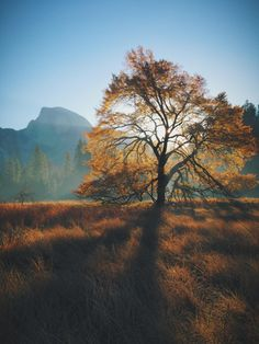 Autumn Morning, Half Dome, and an Elm Tree by James Forbes