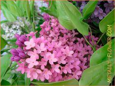 Керамическая флористика, розовая сирень