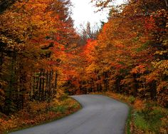 Country Road Take Me Home - Other Wallpaper ID 196894 - Desktop Nexus Nature The Places Youll Go, Places To Go, Algonquin Park, Autumn Nature, Autumn Forest, Fall Pictures, Fall Pics, Largest Countries, Take Me Home