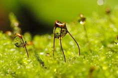 Macro Photography by Marcos Rodriguez. He is 33 year old and lives in Galicia.