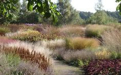 Autumn colour: Piet Oudolf's design for Pensthorpe, where drifts of grasses and…