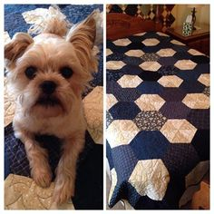 """Jaybird Quilts """"Delight"""" quilt done in Thimbleberrie blues and creams.  Uses the Hex n More Ruler."""