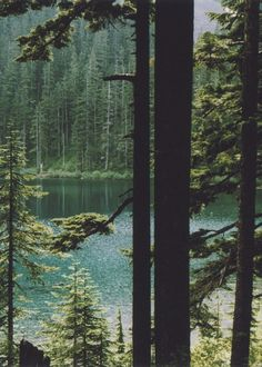 Riding my horse Indian in the Mt Hood National Forest, we would often find lakes like these hidden away.