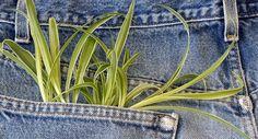 Ropa respetuosa con el planeta. La importancia de conocer la trazabilidad de las prendas que compramos.
