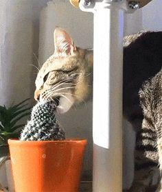 Cat Loves Cactus