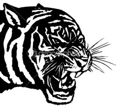 tiger clip art black and white | Vector illustration .The white predatory tiger head, — Stock Vector ...