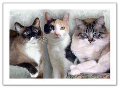 Three Cats - Digital Oil Portrait Painting on Canvas - Portrait Artist ...