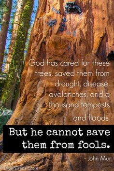 The Poetry Of John Muir: Quotes on Nature, Conservation and Travel | http://www.everintransit.com/john-muir-quotes/