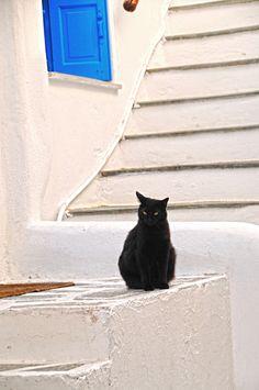 On ne pouvait pas le rater, il ne pouvait pas se confondre dans le décor et en plus, il jouait à la vedette.  Mykonos, Greece.