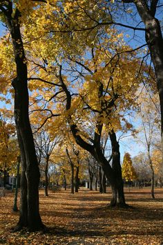 Parc Outremont Outremont park, Montreal, QC #Automne #Autumn #Fall #Canada #Trees #Quebec #montreal