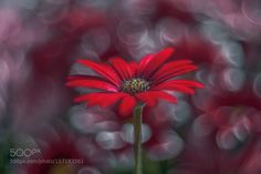 _DSC4462.jpg by Phil_Hart #nature #photooftheday #amazing #picoftheday