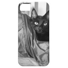 Yes I am purrfect...cute black cat iPhone case iPhone 5/5S Cases