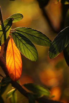 leaves by Katarina Christenson