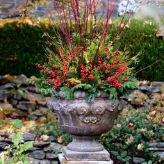 laura from garden answers winter arrangement - Garden Answers