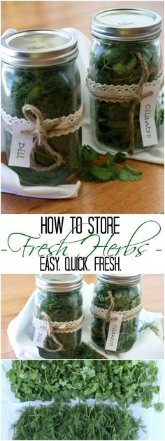 to Store Fresh Herbs. to Store Fresh Herbs.to Store Fresh Herbs. Herb Recipes, Canning Recipes, Canning 101, Canning Jars, Do It Yourself Food, Spices And Herbs, Herbs Indoors, Healing Herbs, Growing Herbs