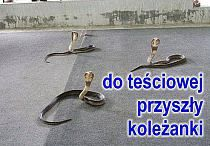 HUMOR - DOWCIPY na Stylowi.pl Wtf Funny, Funny Memes, Jokes, Weekend Humor, Man Humor, Science And Nature, Best Memes, Cringe, Fun Facts
