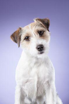 Jeg har mange forskjellige bakgrunner å velge mellom. Få et spennende og annerledes bilde av hunden din. Med farger kan vi skape kontrast eller harmoni og tilpasse uttrykket til din hund. Dog Paintings, Dogs And Puppies, Studio, Wallpaper, Animals, Dog, Animales, Animaux, Wallpapers