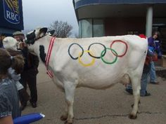 Even cows are enjoying all the Olympic action of 2012!