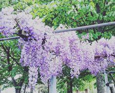 Oggi giorno di riposo...a casa ci rilassiamo in giardino. Vi aspettiamo domani al FRANGIPANE  #frangipanecesenatico #cesenatico #cesena #rimini #cesena #forli #primavera #spring #food #love #cute #instapic #instamood #cervia #milanomarittima #mare #flowers by frangipane_cesenatico