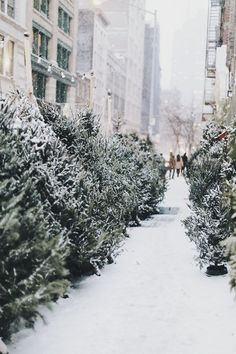Snowy winter wonderland - are those Christmas trees? I must find this place! Christmas Time Is Here, Christmas Mood, Merry Little Christmas, Noel Christmas, Holiday Mood, Nordic Christmas, Natural Christmas, Christmas Shopping, Beautiful Christmas