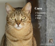 Haben deine Katzen auch Spitznamen? Animals, Life, Tips, Animales, Animaux, Animal, Animais