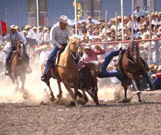 Approximately photos (mostly B&W) available from pro rodeos Also a few thousand photos of flora, fauna and scenics available. Pro Rodeo, Cowboy Up, Wildlife, Horses, Animals, Pictures, Animales, Animaux, Animal