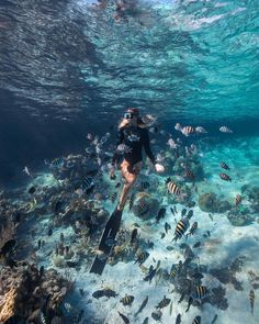 Breathtaking underwater shots by André Musgrove, a multi-talented photographer, filmmaker, freediver, and scuba diving instructor from the little island of… Underwater Photos, Underwater Photography, Travel Photography, Ocean Underwater, Photography Women, Film Photography, Underwater Animals, Street Photography, Landscape Photography