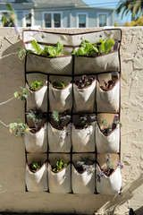 "Shoe Rack Gardening (Vertical Veggies): 1. Hanging pocket shoe organizer. 2. Pole and attachments (curtain pole or pipe fittings, screws). 3. Strong hanging hooks. 4. Compost of a good quality. 5. Selection of plants, seeds or herbs. 6. Piece of wood 2""x2"" as long as the width of the pocket to keep the base of pockets away from the wall. 7. Trough planter to catch drips."