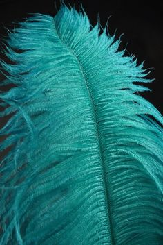 a teal feather
