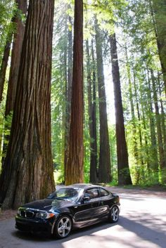 Avenue of the Giants - Scenic Drive Through California's Redwood Trees