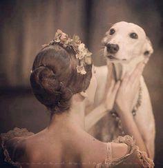 Beautiful Greyhound -Sonia Abrão