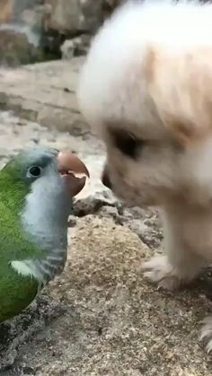 Baby Animals Super Cute, Cute Baby Dogs, Cute Little Animals, Cute Funny Animals, Funny Dogs, Cute Puppies, Tiny Baby Animals, Wild Animals, Animals And Pets