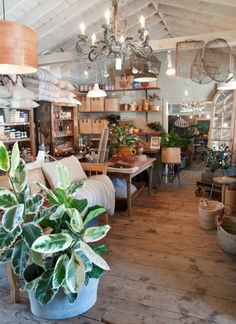 Shop Visit: Tancredi and Morgen carmel valley