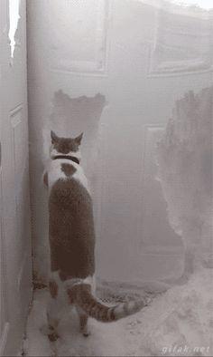 Tumblr: darylfranz: 世界で空前の猫ブームらしいぞ - 2chコピペ保存道場