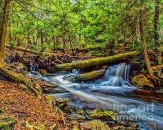 Water Thru The Woods in Ricketts Glen
