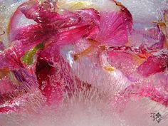Flower Photography, Seed Pods, Berries, Seeds, Frozen, Nature, Flowers, Painting, Image